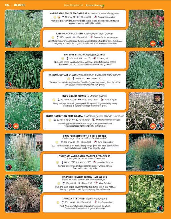 Grasses-page-001.jpg