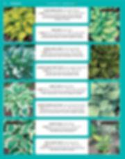 Perennials-page-021.jpg