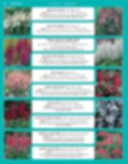 Perennials-page-005.jpg