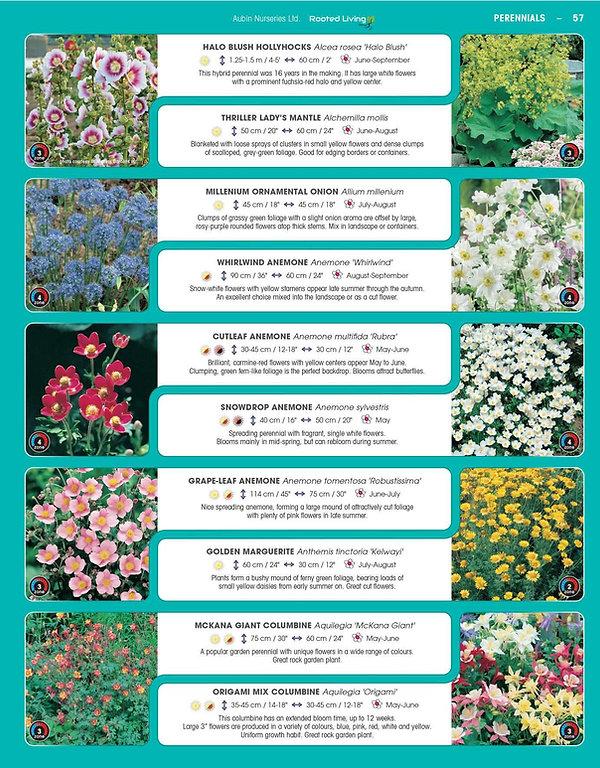 Perennials-page-002.jpg