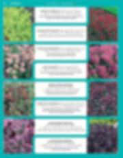 Perennials-page-043.jpg