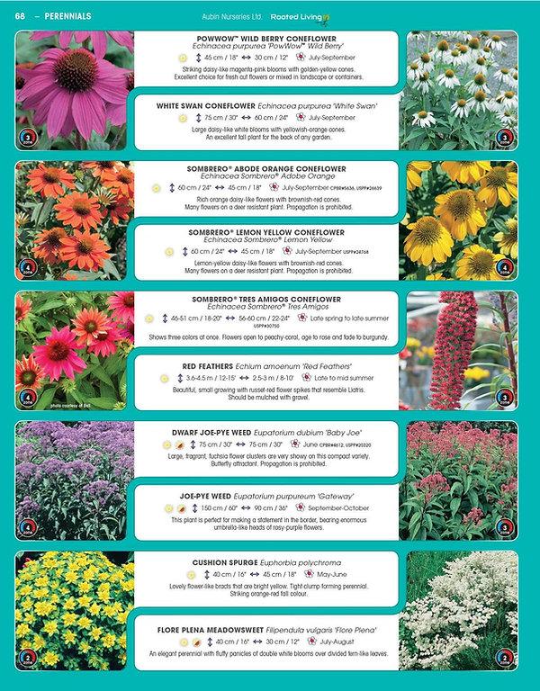 Perennials-page-013.jpg