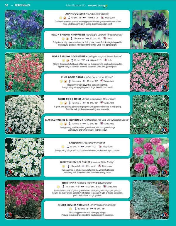 Perennials-page-003.jpg