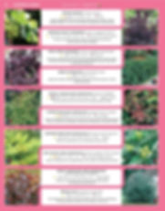 Ornamental Shrubs-page-005.jpg