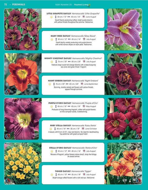 Perennials-page-017.jpg