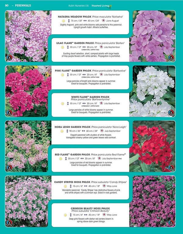 Perennials-page-035.jpg