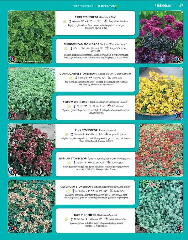 Perennials-page-042.jpg