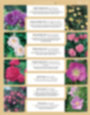 Roses-page-004.jpg