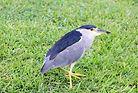 florida nature coast bird