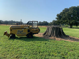 tree stump being removed