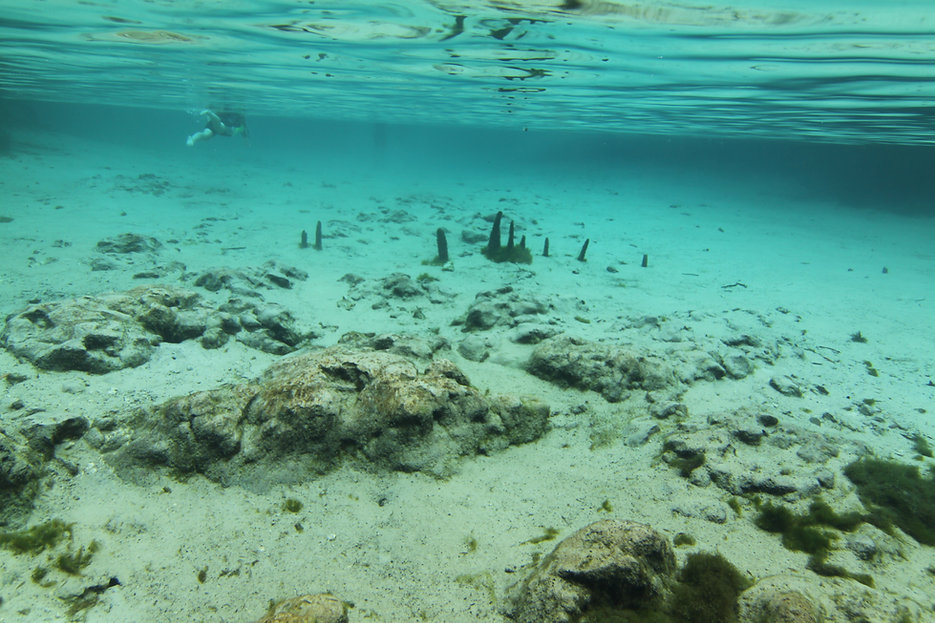 crystal river springs floor.JPG
