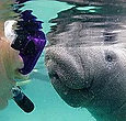 Aquavision Manatee Tours Photo
