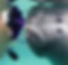 manatee snorkel