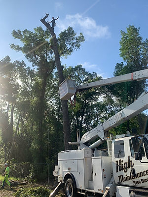 tree trimming around power lines.jpg