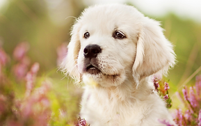teahub.io-baby-puppy-wallpaper-837738.pn