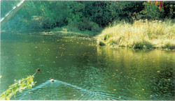The Black River cleanup site, 2000