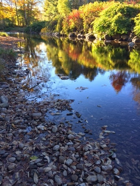 New River Dipping Sites!