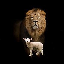 lamb and lion.PNG