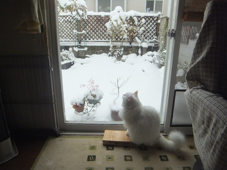 雪でも見ながら・・・