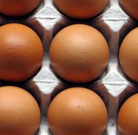 8 Bienfaits des œufs: l'aliment roi pour être en forme