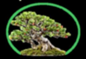 Bonsai site web.png