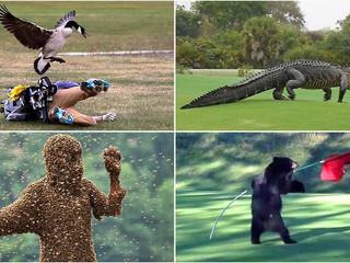 Golf Can Be The Craziest of Games