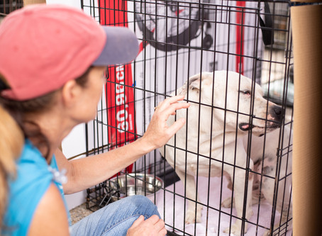 Northshore Humane Society : Rescue & Clear the Shelters 2019
