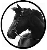 Animal -Caballo - Cabeza Negra1.png