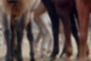 Patas de caballo.png