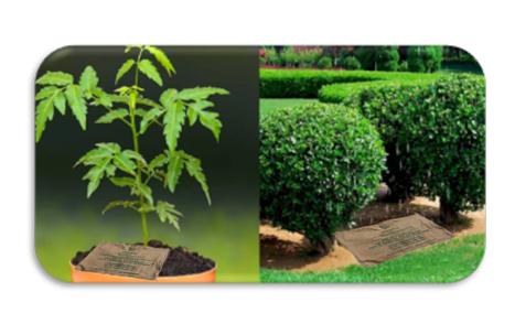 Horticultura 3.png
