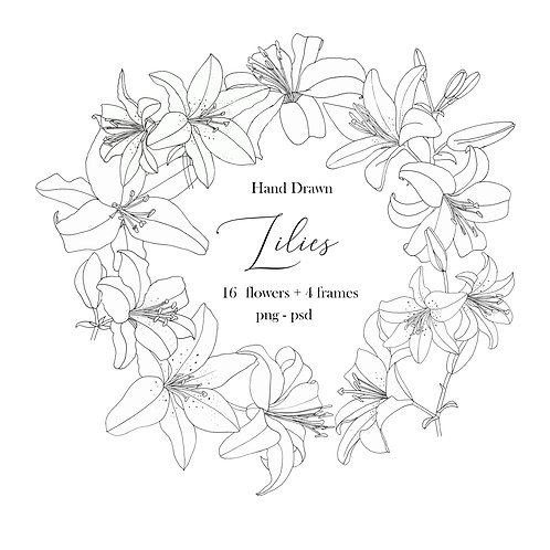 Hand Drawn Lilies Set - Extended License