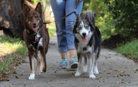 Dog Walking Etiquette in a Big City... Here's What You Need to Know!