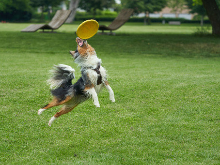 Going to the Dog Park? Keep You and Your Pup Safe by Knowing These Safety Tips and Best Practices