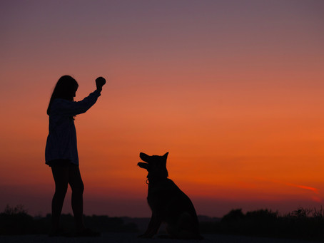 A Beginner's Guide to Dog Training - Tips & Resources for Training Your Pup!