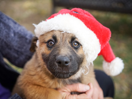 2020 Holiday Gift Guide for Dogs & Dog Owners