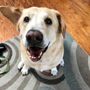 """Hunter was great. My doggie was very happy to have her walk and smiling when I got home. Thank you for being so responsive to my pets needs."""