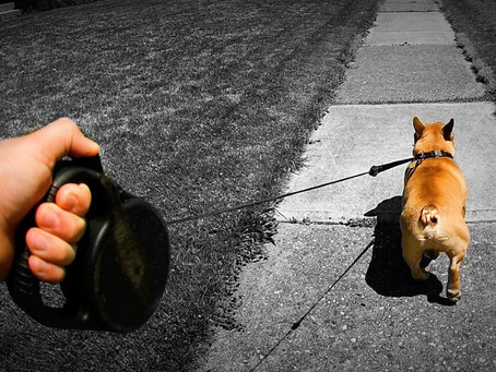 Is It Time to Ditch the Retractable Leash?