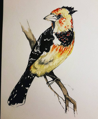 Bird Crested barbet