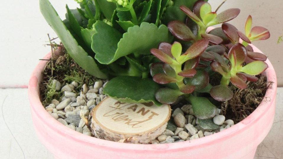 coupe de plantes 1