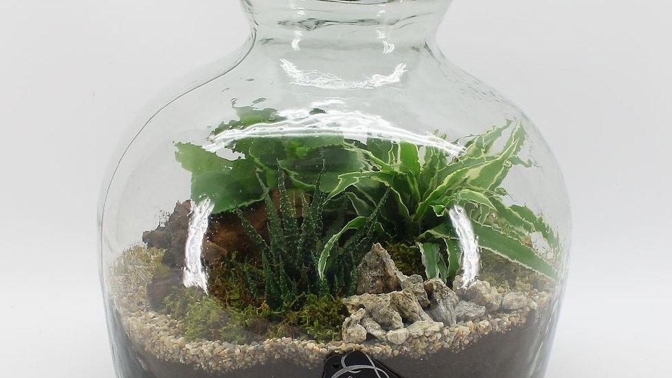 verrerie bonzai et plantes
