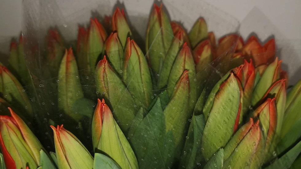 fleurs tulipe