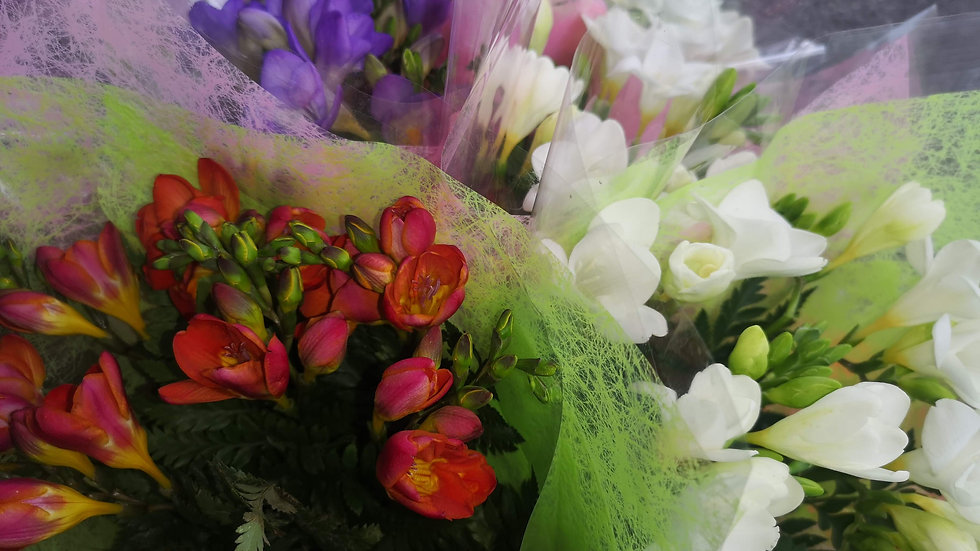 fleurs- freesia