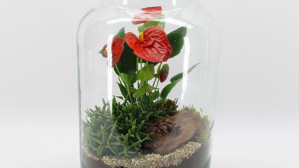 verrerie plantes anthurium