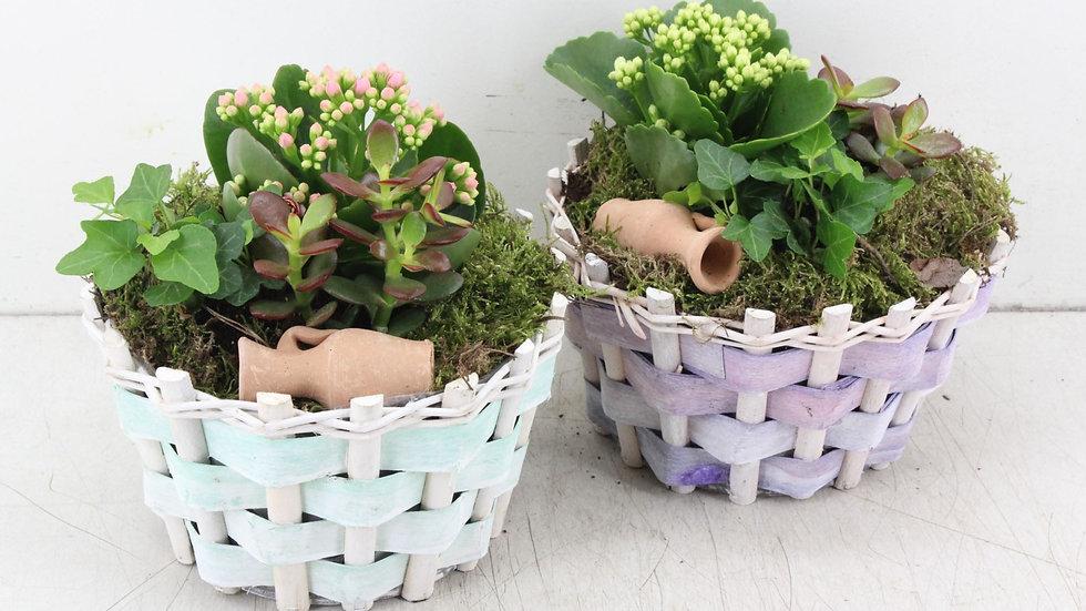 coupe de plantes 4