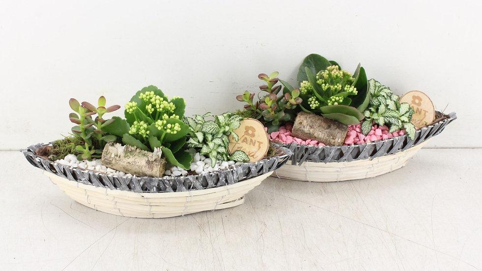 coupe de plantes 5