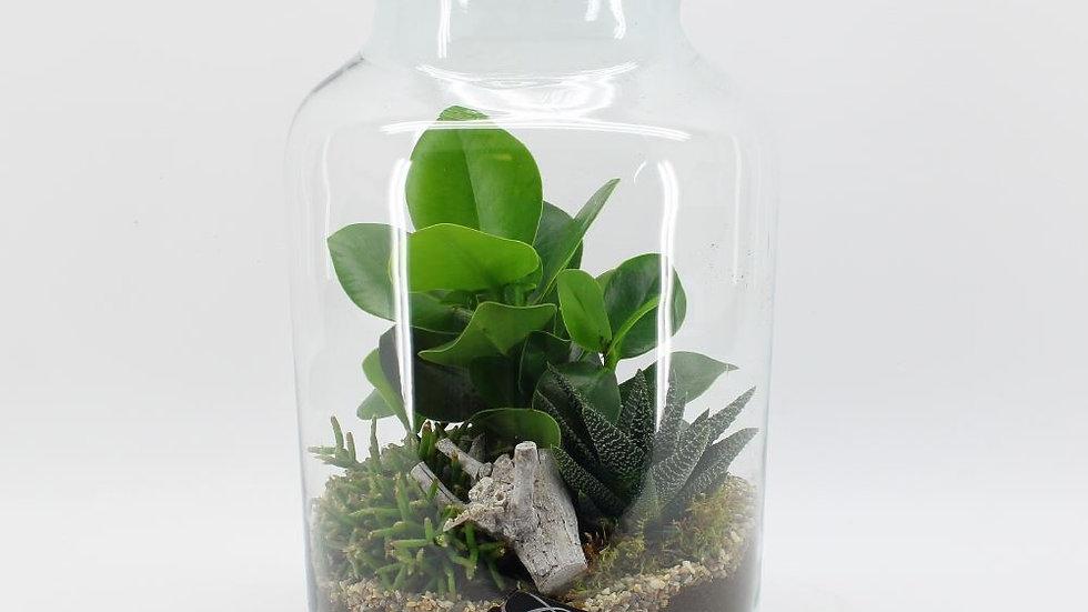 verrerie plantes n°2