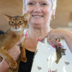 Abyssinian Breeder Show 2015