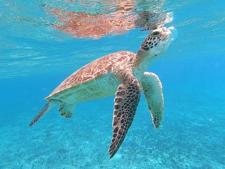 Unterwasserwelt der Tobago Cays