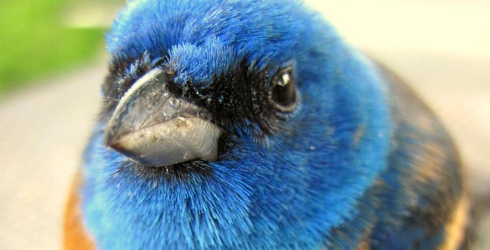 birdface.jpg