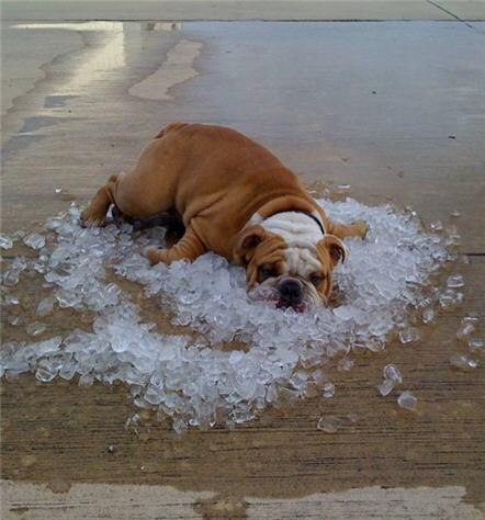 chien-glace.jpg